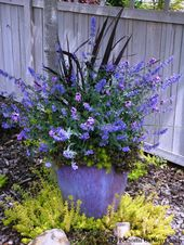 love the blue colours.  #backyard #flower #plant