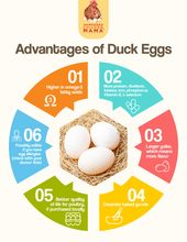 Cooking With Duck Eggs Duck Eggs Egg Nutrition Egg Nutrition Facts