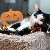 Happy Meow-O-Ween von Miss. Eureka Vergessen Sie nicht unsere spooktakuläre Adoption …