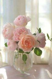 rose ,Beautiful – Flowers