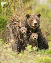 Spektakuläre Wildtierfotografie von Thomas D. Mangelsen