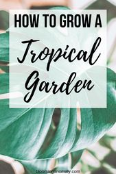 If you love low maintenance flowers and plants, learn how to grow your own tropi… – A Bloggers Group Board
