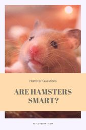 Are Hamsters Smart