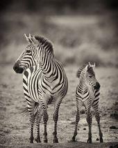 Das Beste aus der afrikanischen Tierfotografie von Billy Dodson
