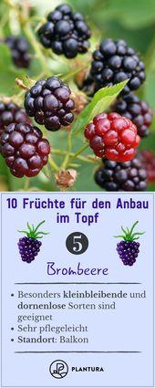 10 fruits for growing in a pot   – Balkon: Pflanzen & Ideen