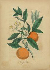 Balkonobst – die besten Sorten und Sorten, Balkonobst, Obst im Topf, Obst auf dem …   – bepflanzung