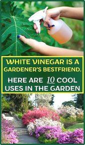 #garden easy ideas, container #gardening ideas uk vegetarian society, bbc garden…