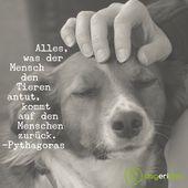 Unsere Hunde zeigen uns, wie sie jeden Tag lieben