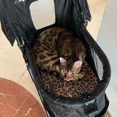 Happy National Cat Day … Meowmy ist auf ihrer Geburtstagsreise … Ich will nur etwas …
