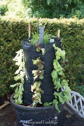 Schnecken natürlich bekämpfen- Salat aus dem Garten im Salat-Turm. Anleitung – Garten
