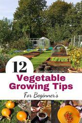 Great tips for your first vegetable garden   – Ideen für Gemüse gärten