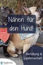 DIY Dog Wie kombiniert man 2 Leidenschaften? Die Liebe zum Hund und die Liebe zum Handwe...