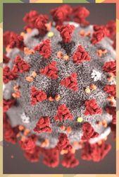 اللهم اني اعوذ بك من البرص والجنون اعوذ البرص اللهم اني بك من والجنون In 2020 Echinacea Benefits Echinacea Root Echinacea Tea