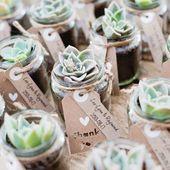 Des succulentes comme marque-place
