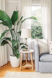 Über 60 Ideen für die Gestaltung von Pflanzenständen für Zimmerpflanzen