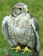 الغاز بدوية حديثة Animals Owl Bird