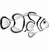 20+ Clownfish Clipart Black And White