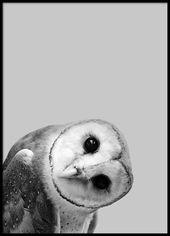 Owl peekaboo Poster in der Gruppe Poster / Größe…
