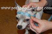 Earflap Dog Hat Custom made for Dogs 2-15 lbs Chihuahua hat – Dog Beanie – Manualidades navidad