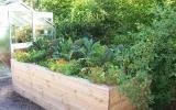 Hochbeet: Große Erträge auf kleinem Raum   – Garten