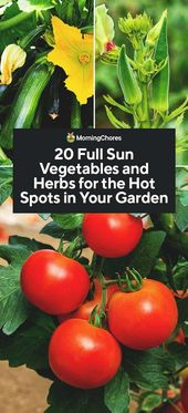 20 Full Solar Greens and Herbs for the Scorching Spots in Your Backyard