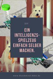 Un juguete de inteligencia hecho por ti mismo.   – Beschäftigung für Hunde