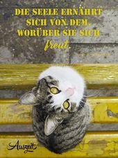 Sprichwortsammlung (Seele) • Auszeit.bio | #Extemporio # Sprichwörter #Augstinus #Seele #Freude #Katz
