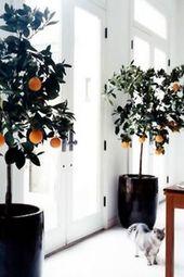 7 wartungsarme Zimmerpflanzen, die Sie absolut nicht töten können   – House plants