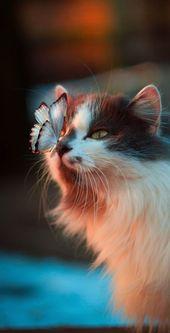 Cute Cat Wallpaper für iPhone – Schöne Katze mit Schmetterling – bunt – Katzen – Katzen