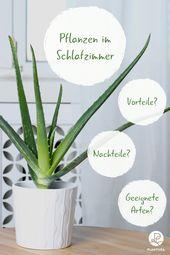 Pflanzen im Schlafzimmer: Vorteile, Nachteile und geeignete Arten – Gesundheit & Wellness
