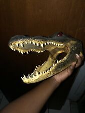 "LG  5/"" GENUINE ALLIGATOR HEAD SKULL TAXIDERMY REAL TEETH JAW REPTILE SWAMP GATOR"
