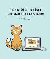 Die Realität, eine Katze zu haben