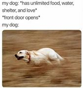 So accurate haha. Doggo be like move move move… #dog #dogs #pet #pets #animal #animals