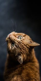Cute Cat Wallpapers Hd For Mobile Phone I Like Cats Very Much Beautiful Cats Cute Dog Wallpaper Cute Cat Wallpaper