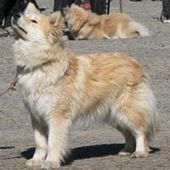 Koiranpennun Ruokinta With Images Koira