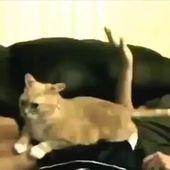 #video #shortvideo #catvideo #catvideos #cats #cats_of_instagram  – Tiere