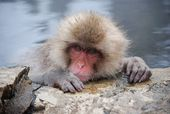 "Japan Journal: Snow Monkeys, the Japanese ""Alps"" a…"