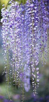 25 köstliche Blumenfotos   – Blumen – #Blumen #Blumenfotos #köstliche – Blumen
