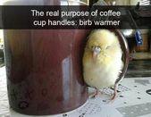 Ein sehr schöner Birnendump für die Vogelliebhaber – #Birnendump #die # one # für …