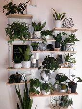 Zimmerpflanzen, Pflanzen Wand, Wanddekore, DIY Pflanzen Dekor Wand, Wohnzimmer Dekor …