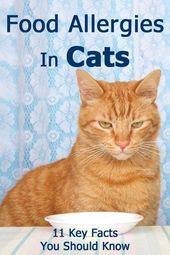 Möchten Sie mehr über Katzentraining wissen? #Cattraining #katzengeburtstag Möchten Sie mehr über Katzentraining wissen?  – ltdwins2342