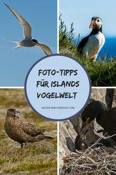 Fototipps für Islands Vogelwelt – Reiseblog