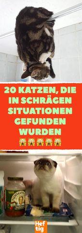 20 Katzen in schrägen Situationen gefunden. #katze #katzen #fotos # …   – Katzen