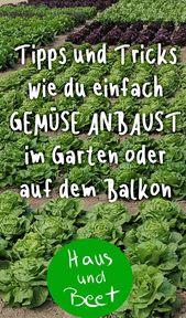 Groenten kweken Kalender plan groenten Beginner balkon verhoogd bed pot tuin. Gr…