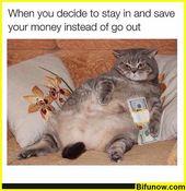 Lustige Meme Bilder des Tages – 28 Bilder   – Animals