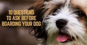 10 Questions to Ask Before Boarding Your Dog – That Mutt