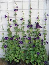 Top 10 Blüten leicht aus Samen zu züchten | Blog…