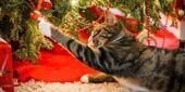 Wie man den Weihnachtsbaum katzensicher macht – The Catington Post