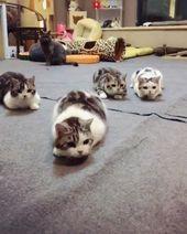 Beobachten Sie, wie eine Katze es für den Rest der Kätzchen vermasselt.