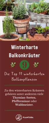 Winterharte Balkonpflanzen: Die Top 11 für Ihren Balkon